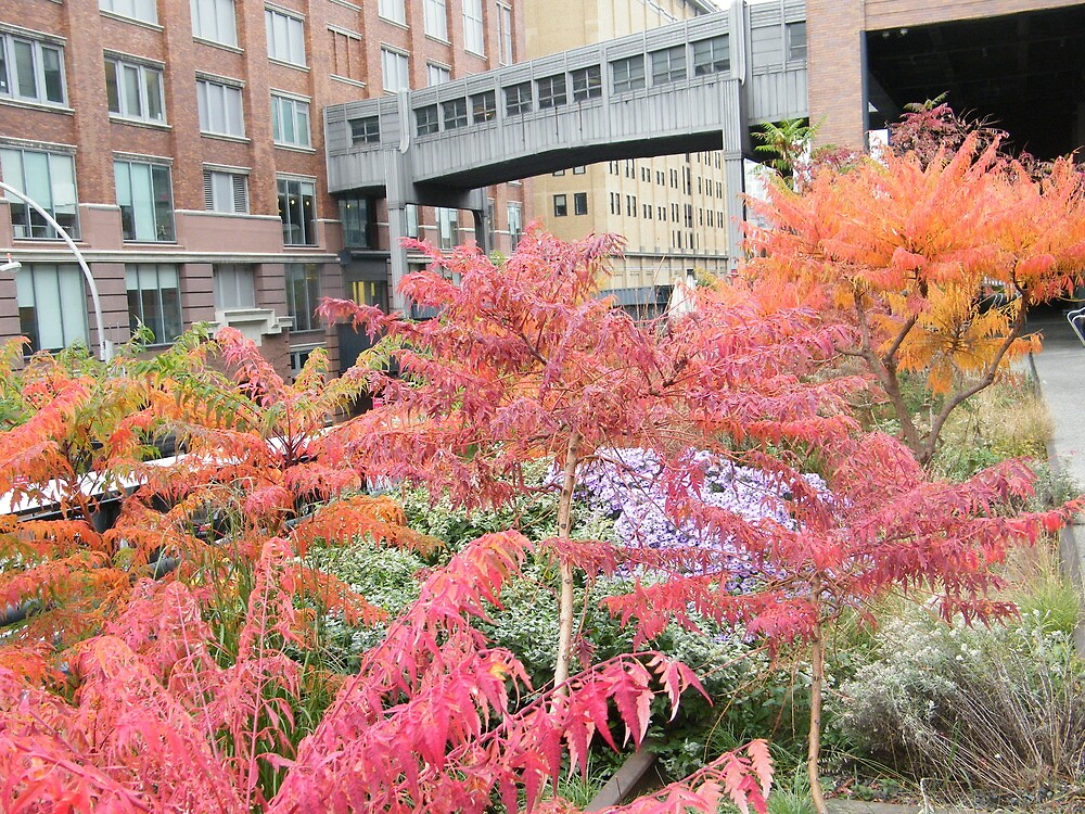 High Line, Autumn Colors, New York's Elevated Garden and Park, New York City by lenspiro
