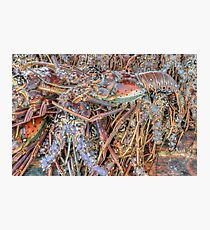 Fish Market: Crawfish at Montagu Beach in Nassau, The Bahamas Photographic Print