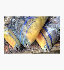 Fish Market: Turbot Fish at Montagu Beach in Nassau, The Bahamas Photographic Print