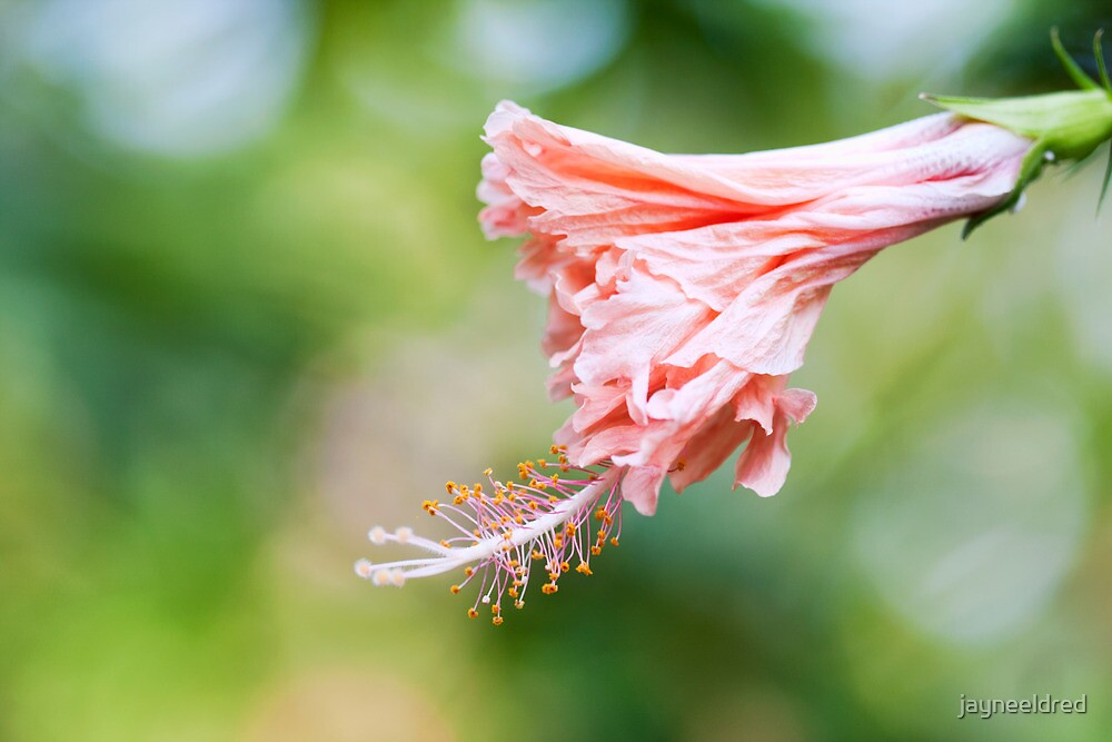 Salmon Pink Hibiscus Twirling Skirts by jayneeldred