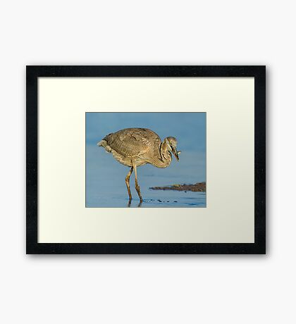 To swim another day! Framed Print