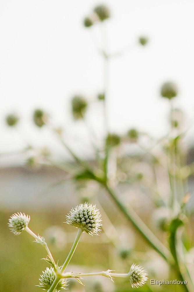 Highline Flowers by Elephantlove