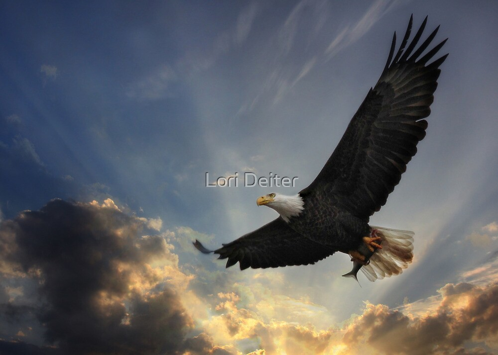 Soar to new heights by Lori Deiter
