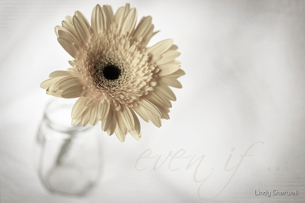 even if... by Lindy Sherwell