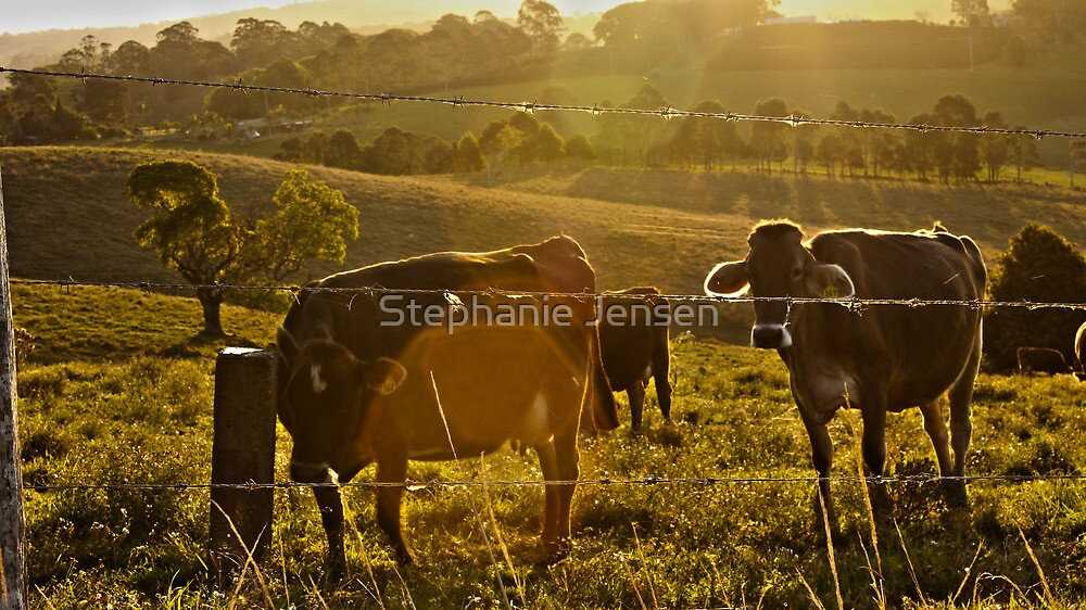 Cow Fields at Sunset by Stephanie Jensen