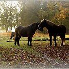 Herd of horses at the Posbank by hanslittel