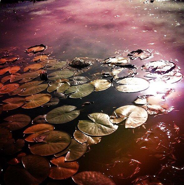 lotus universe by kiela73