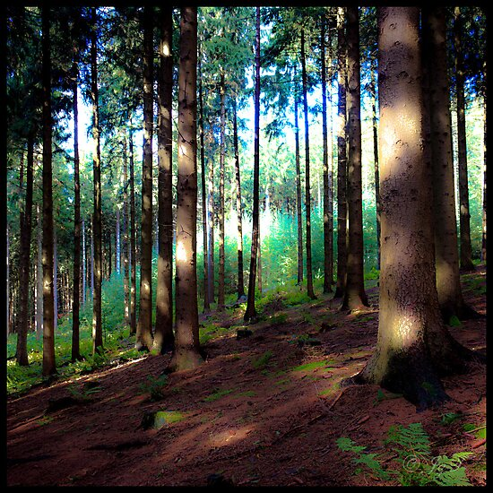 Woodland by johnjgt