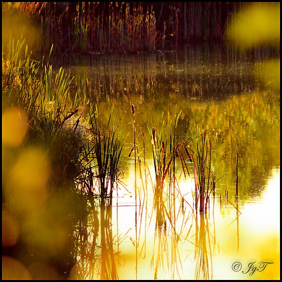 The Pond by johnjgt