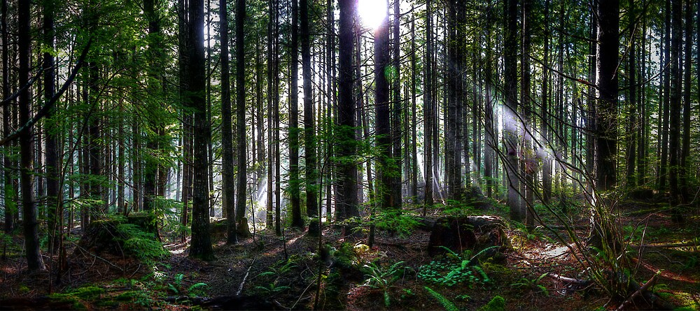 In Your Light by Charles & Patricia   Harkins ~ Picture Oregon