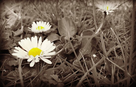 Daisy by Michael  Sawyer
