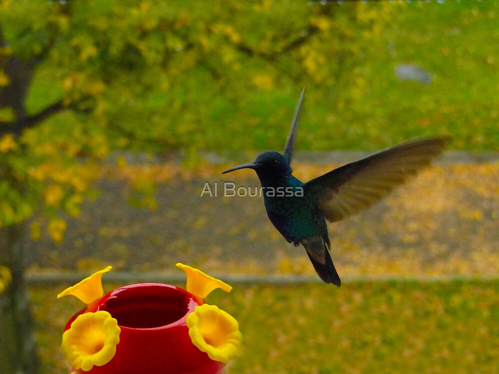 Look What We Have Here by Al Bourassa