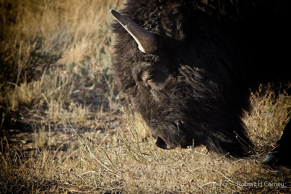 Bison Bull Closeup by Robert H Carney