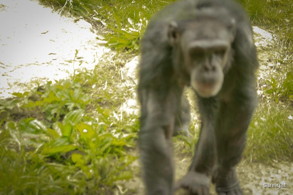 chimp by sanngat