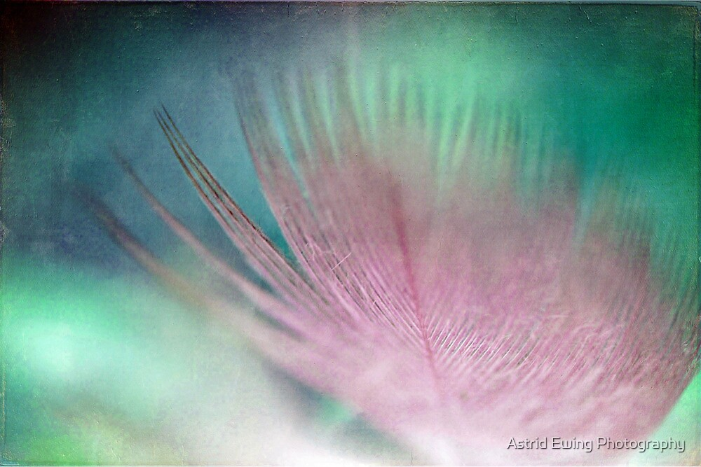 Textured Feather Macro by Astrid Ewing Photography
