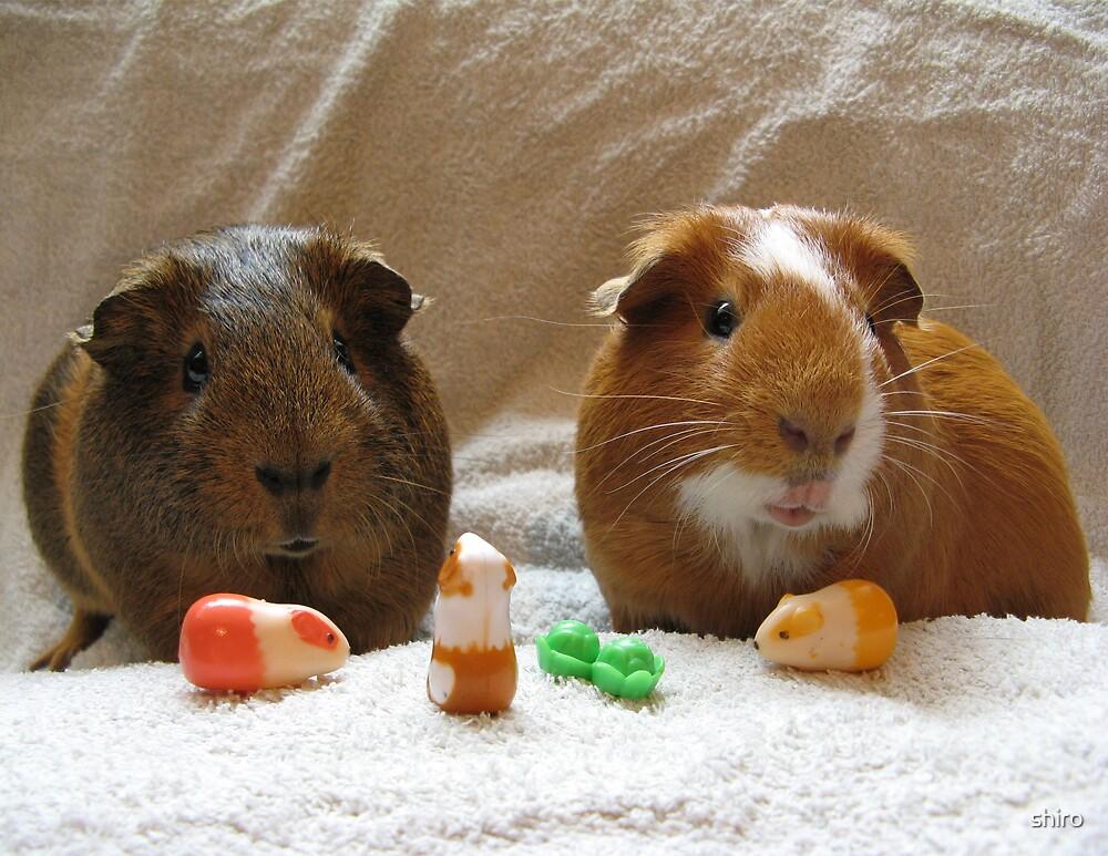 Piggie Playtime by shiro