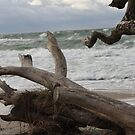 Drift Wood by karina5