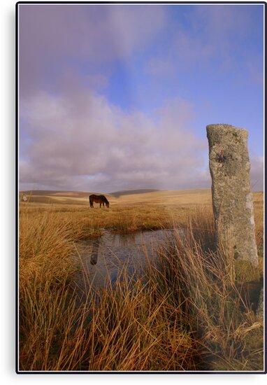 Lonely pony by smurfington
