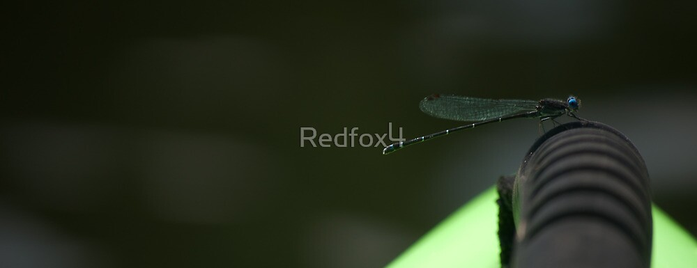Dragonfly making perch  by Redfox4