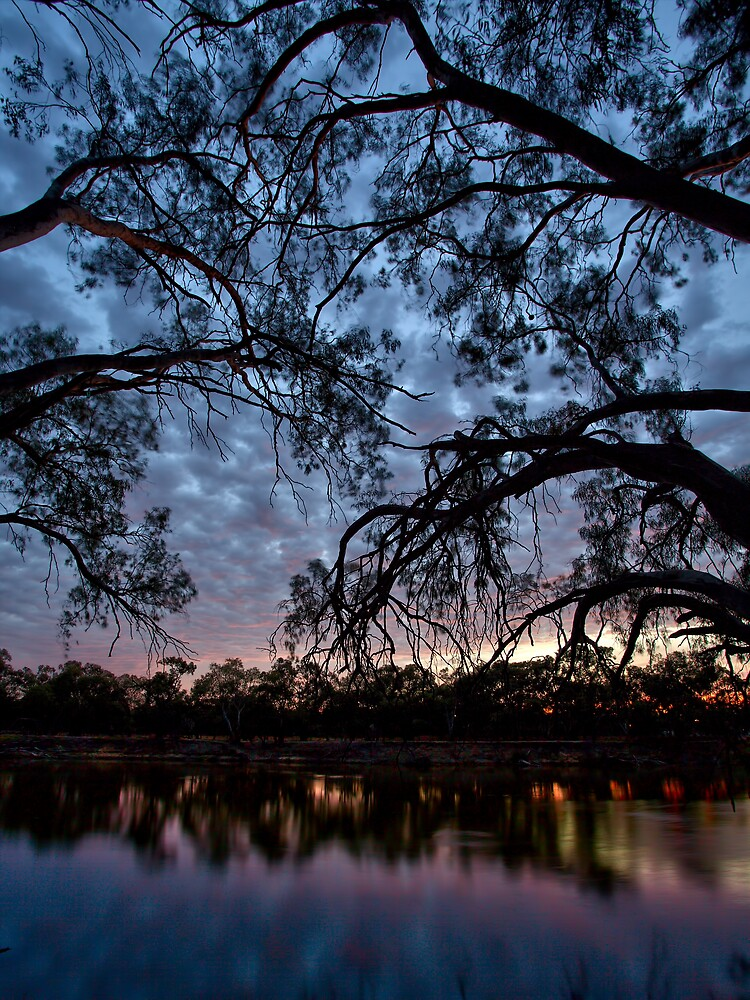 Through The Trees by Mark Cooper