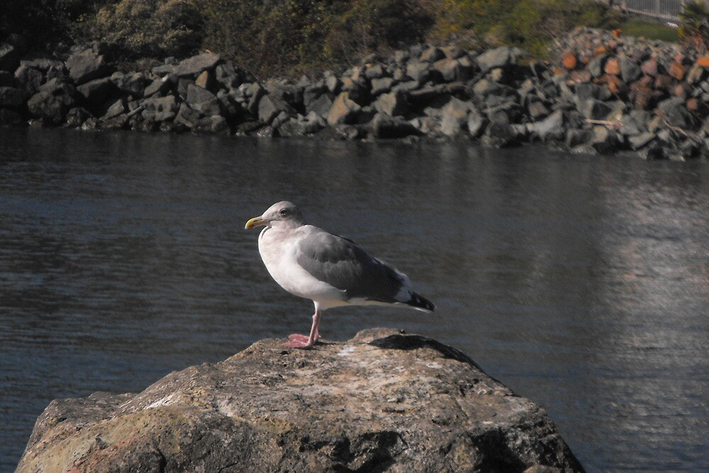 Seagull lookout by Carolynn Cumor