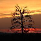 Black Tree by cishvilli