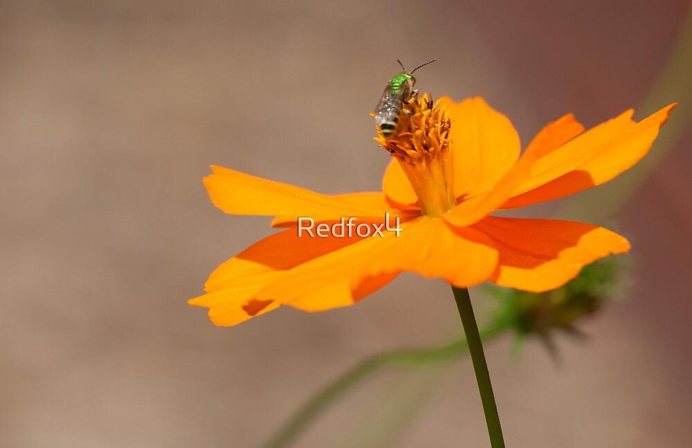 Green on Orange by Redfox4