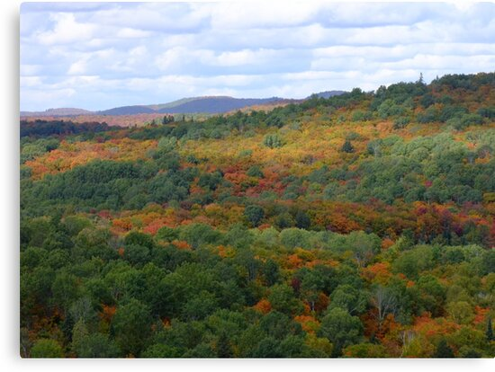 The View Atop The Lookout Trail Sept 26 2012- Algonquin Provincial Park by Tracy Wazny