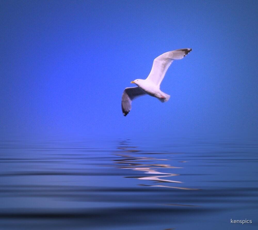 Seagull in Flight - #2 by kenspics