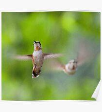 Hummingbirds, Mt Robson, BC Poster