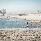 African winter wonderland. Kestell, Free Sate, South Africa by Fineli