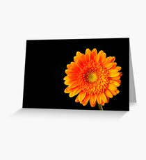 Orange Gerbera Greeting Card