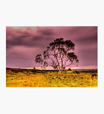 Spring Storm  Rural NSW Photographic Print