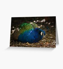 Sitting Peacock Greeting Card