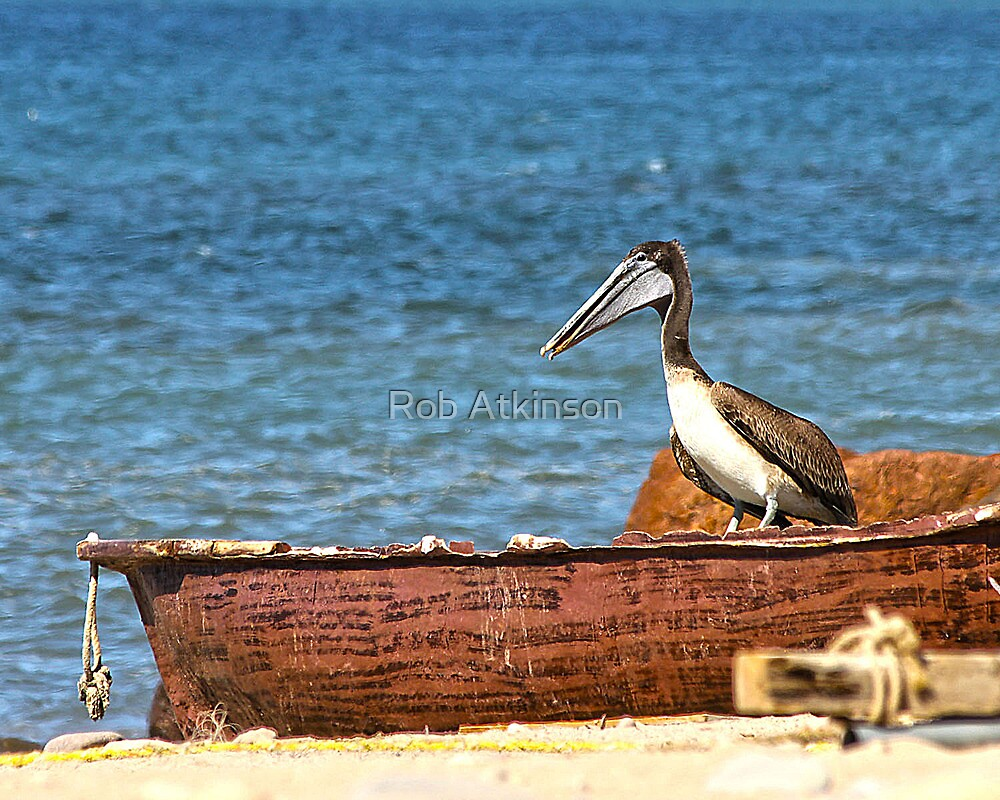 Puerto Pelican by Rob Atkinson