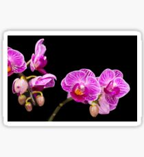 Pink Orchids Sticker
