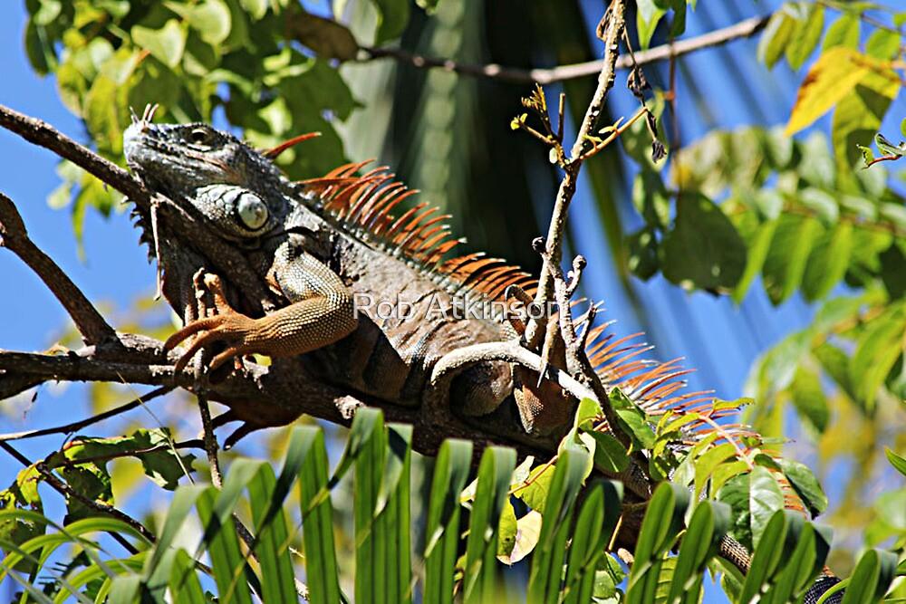 Tree Lizard by Rob Atkinson