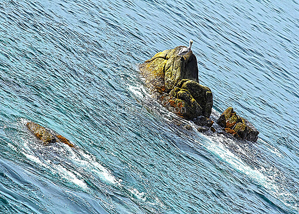 Pelican Turf by Rob Atkinson