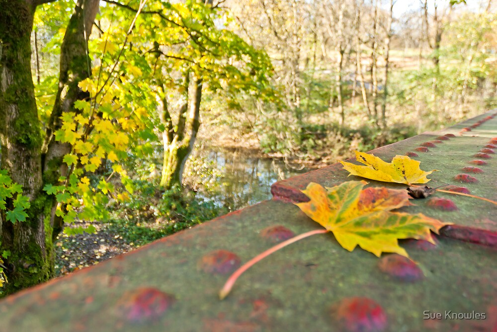 Shades of Autumn by Sue Knowles