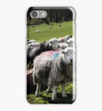 Herdwick Sheep in the Lake district iPhone Case/Skin