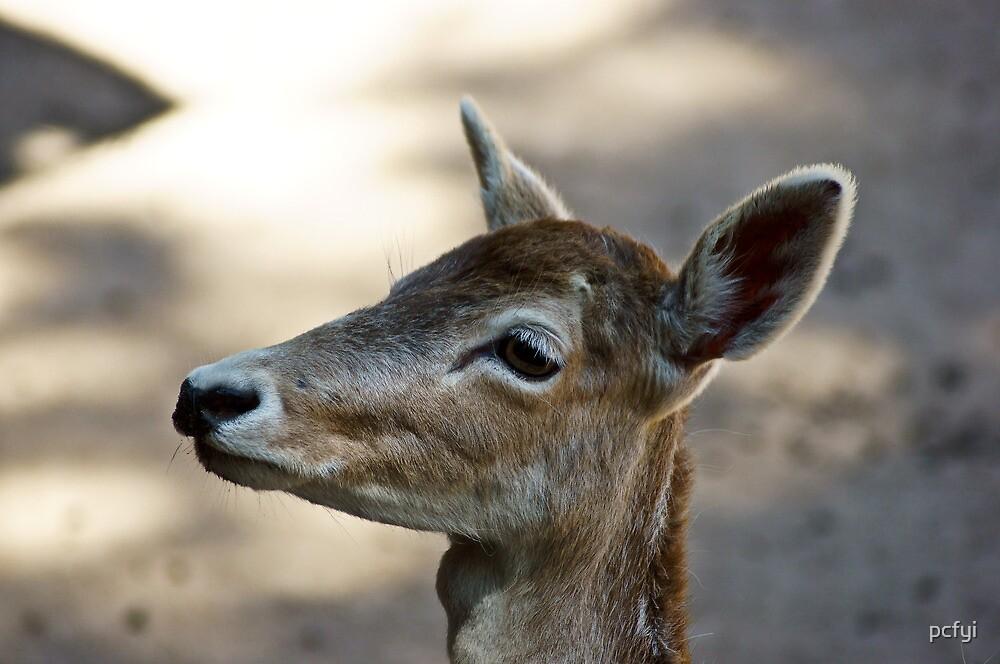 Deer l by pcfyi