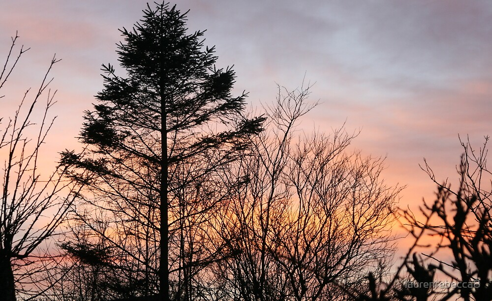 Sunset trees by laurenrebecca8