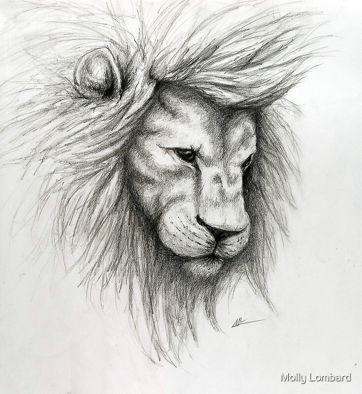 """""""Lion Pencil Sketch"""" Photographic Prints by Molly Lombard ..."""