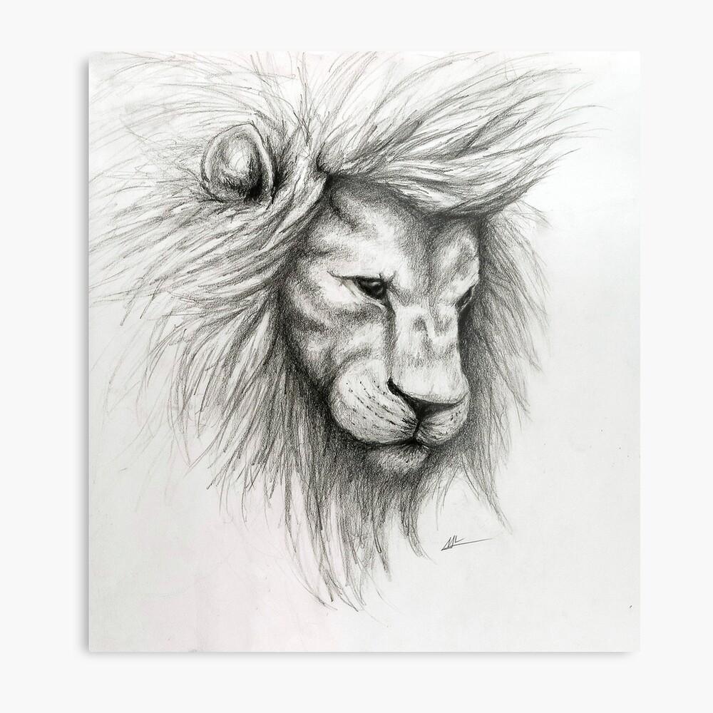 Lion pencil sketch metal print