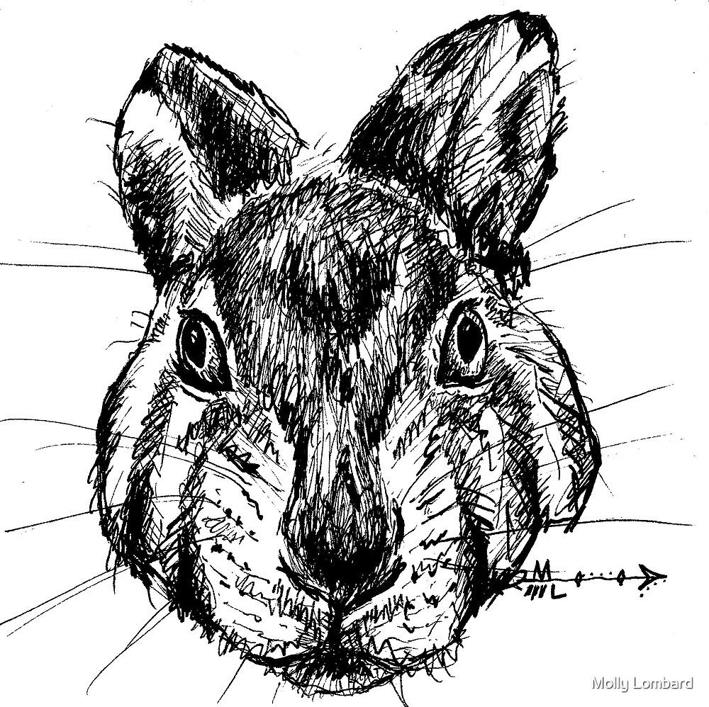 The Rabbit - Ink Drawing by Molly Lombard