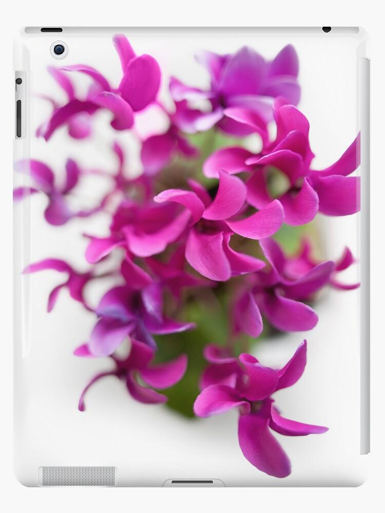 Cyclamen in vivid purple by Martyn Franklin