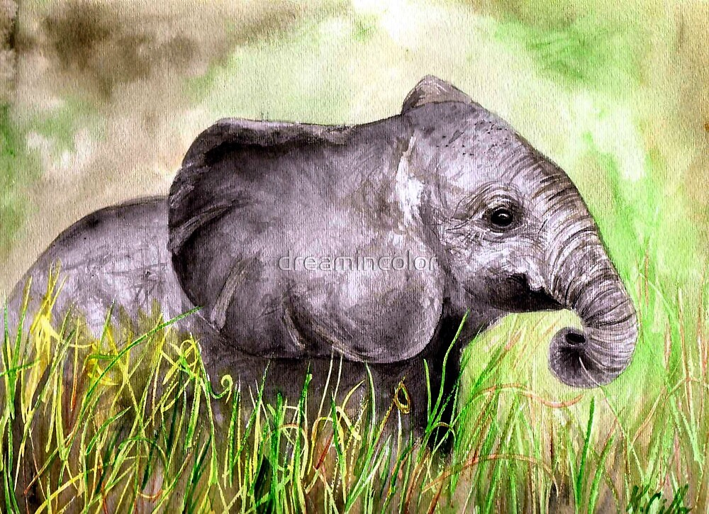 Elephant in the grass by Kerry Cillo