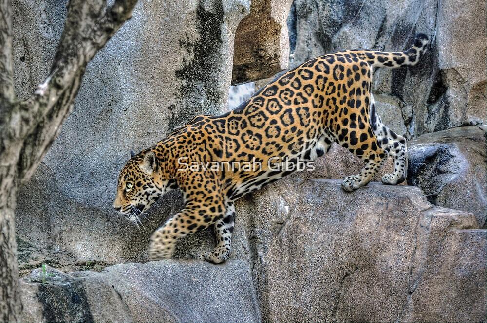 Leopard by S Gibbs