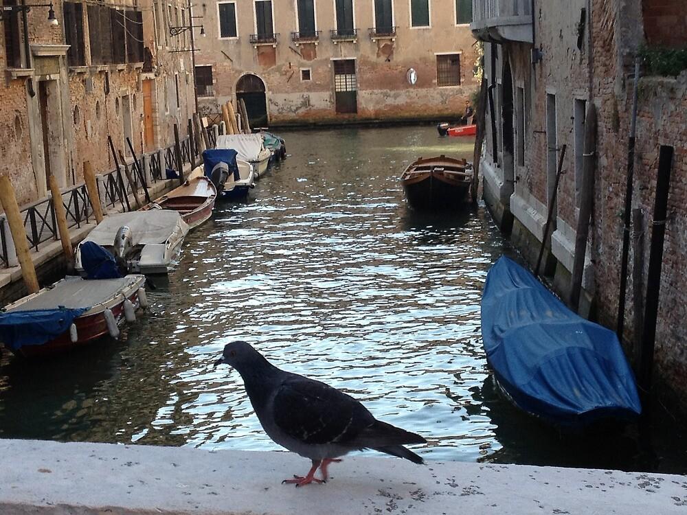 Urban Pigeon by RedBallooon