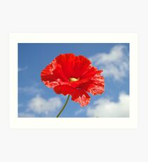 The Single Poppy Art Print